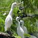 Uccelli verso la Pintada
