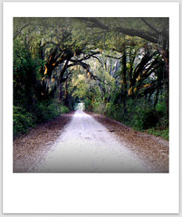 dirt road (xthylacine) Tags: road trees usa tree film america canon georgia polaroid us evans moss unitedstates path south scan southern dirt trail scanned spanishmoss dirtroad callaway backroad enchanted gravelroad claxton hcallaway xthylacine