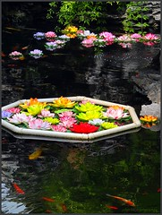 The lotus pond with Koi carps in the Jade Buddha temple - Shanghai (6 pictures) (jackfre2 (on a trip-voyage-reis-reise)) Tags: china fish pond shanghai carps koifish lotusflowers lotuspond giantkoifish mygearandme mygearandmepremium rememberthatmomentlevel1