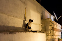 Cat (marios_h) Tags: cats cat feline aegean bozcaada catshadow ege aegeansea tenedos egedenizi aegeanislands aegeanisland