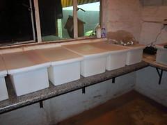 Zinc plating plant buckets (sarel.wagner) Tags: plant zinc plating chromate