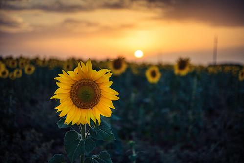 Flowerrise