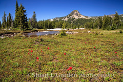 Park Butte and Wildflowers (chasingthelight10) Tags: flowers mountains nature oregon centraloregon landscapes places mtjefferson jeffersonpark wildflowers wildernesstrails cascaderange parkbutte mountjeffersonwildernessarea