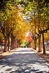 Hit The Road (susivinh) Tags: road autumn fall seasons camino carretera path paseo otoo stroll estaciones