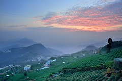 Tea Field @ (Vincent_Ting) Tags: sunset sky clouds taiwan  formosa  jiayi   seaofclouds alisan    teafield