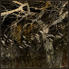 Night Willow (Tim Noonan) Tags: urban brown tree art texture grass night digital photoshop reeds dark mood background willow ochre hue mosca hypothetical vividimagination artdigital greenscene shockofthenew stickybeak sharingart maxfudge awardtree maxfudgeawardandexcellencegroup magicunicornverybest magicunicornmasterpiece magiktroll exoticimage digitalartscene netartii donnasmagicalpix vividnationexcellencegroup