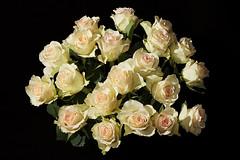 Roses [explored] (Sebastian.Schneider) Tags: roses rose hessen bouquet ldk blumenstraus lahndillkreis lahndill