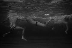 Waterpolo #3 (Ayertosco) Tags: reportage monochrome sport underwater blackandwhite