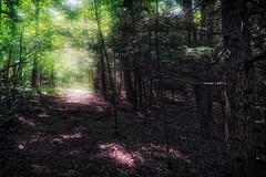 Wetland Glow, 2016.07.24 (Aaron Glenn Campbell) Tags: bmr backmountainrecreation lehman backmountain luzernecounty nepa pennsylvania trails foliage outdoors nature hikepa optoutside meetthemoment weekend morning hdr 2ev macphun aurorahdrpro sony a6000 sonyalpha6000 ilce6000 a6k mirrorless sigma 19mmf28exdn primelens emount