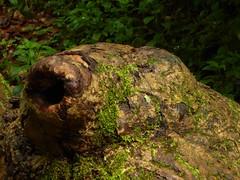 In der Drachenschlucht bei Eisenach 24 (Chironius) Tags: eisenach thringen deutschland germany allemagne alemania germania    ogie pomie niemcy pomienie holz wood legno madera bois hout