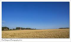 North Elkington, Lincolnshire (Paul Simpson Photography) Tags: lincolnshire lincolnshirewolds sonya77 summertime august2016 imageof imagesof paulsimpsonphotography photoof photosof naturalworld nature bluesky crops farming farms farm fields
