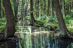 Am Werderflie (thewhitewolf72) Tags: buckow mrkischeschweiz werderflies fluss see schermtzelsee wald erlen buchen licht spiegelung natur buckowersee