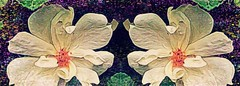 The Celebration Of Twins (Photosintheattic) Tags: twins roses life celebration photoeffects effects flickr