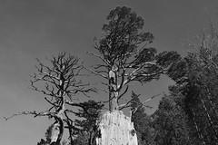 DSC_3422-1 (MartinDavid07) Tags: lake france pyrnes bw black white winter sky contrast pau tree trees