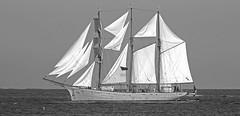 L' explorateur / The Explorer (universeau) Tags: navire monochrome noiretblanc blackandwhite mer eau voilier yacht normandie france manche sea blancoynegro   yate mar  horizon
