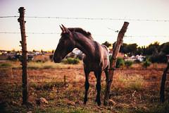 Sad horse (Leo Hidalgo (@yompyz)) Tags: canon eos 6d dslr reflex yompyz ileohidalgo fotografa photography vsco campo countryside descampado mijas fuengirola mlaga espaa spain animal caballo horse
