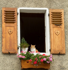 petit chat (rascal76160) Tags: fenetre windows volet cat chat fleur jardiniere animal