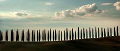 Tuscan landscape (rinogas) Tags: rinogas italy toscana tuscany cypresses sanquiricodorcia valdorcia