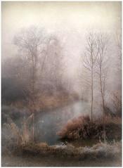 Angolo d'Inverno.. (Raul-64) Tags: texture paesaggio landscape inverno alberi bassapadovana veneto italia