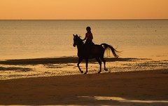Horseriding at sunset (ToSti NL) Tags: silhouettes coucherdesoleil chevaux mer beach sea northsea silhouette sun soleil horseriding sunset