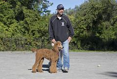 2671 (Jean Arf) Tags: ellison park dogpark rochester ny newyork september autumn fall 2016 poodle dog standardpoodle paul gladys