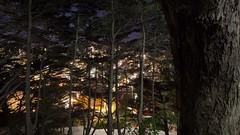 A View From The Top (JBernadez) Tags: sanfrancisco california northbeach coittower saintspeterpaulchurcharchitecturecityurbanstreetphotographycanoncanon ef 1635mm f28 usm night