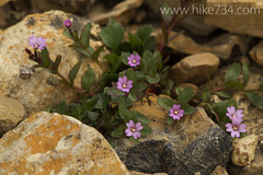 """Flowers among the rocks • <a style=""""font-size:0.8em;"""" href=""""http://www.flickr.com/photos/63501323@N07/7890544722/"""" target=""""_blank"""">View on Flickr</a>"""