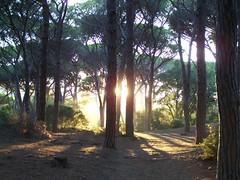 2012-08-20--193234-Feniglia (MicdeF) Tags: tramonto duna sole pineta pini feniglia portoercole solebasso