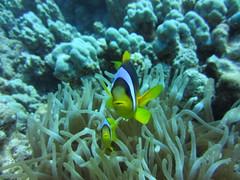 Soma Bay 2012 (mr.moxtra) Tags: bay underwater dive egypt soma breakers reef ägypten 2012 riff tauchen