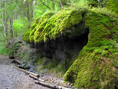 Rocks surrounded by lush green Moss (Batikart) Tags: wood trees summer mountain plant tree green nature grass leave