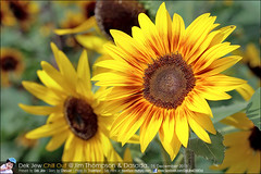 1Day-trip-Jim-Thompson-Farm&Dasada-Gallery_E12663461-022