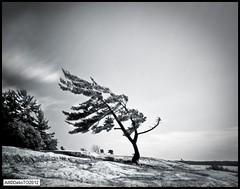 Over at Killbear (DelioTO) Tags: wood toronto ontario canada landscape blackwhite trails panoramic pinhole september 4x5 f250 killbear adox25 filterred25a autaut ro9 nonthelake