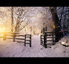 Light leak (Stuart Stevenson) Tags: trees winter white snow cold rural fence woodland photography woods gate path tracks wideangle snowfall pathway treelined walkingthedog diffusedlight clydevalley canon1740mm thanksforviewing canon5dmkii stuartstevenson stuartstevenson