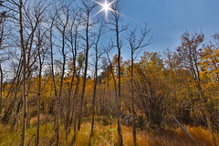 HDR (Turner Smith Photography) Tags: red fall nature colors landscape colorado lakes feather co aspen hdr wwwcoloradophotographyexperiencecom