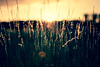 Un dernier rayon (Marc Benslahdine) Tags: sunset summer macro green yellow soleil bokeh lightroom herbes canonef100mmf28macrousm marcopix canoneos5dmkii tripax ©marcbenslahdine marcopixcom