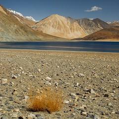 Do you hear the silence? (Nathalie Pellegrinelli) Tags: blue water eau desert earth lac terre himalaya ladakh pangonglake the4elements