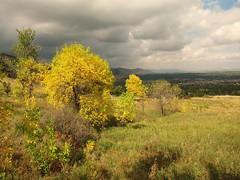 trees above Chautauqua (Eli Nixon) Tags: autumn sky usa color clouds landscape boulder rockymountains frontrange autumncolor chatauquapark afternoonwalk iso80 bouldercounty elinixon canons90