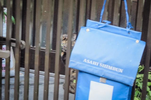 Today's Cat@2012-10-01