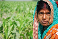 Farmer weeding maize field in Bihar, India (CIMMYT) Tags: woman india plant planta field work person persona trabajo site mujer corn asia farm indian farming working crop campo farmer agriculture producer atwork partnership maize collaboration plot weeding indio sitio trabajando granja pusa southasia bihar southasian asociacin agricultura labranza parcela agricultor bisa maz colaboracin productor agricultora cimmyt eneltrabajo femalefarmer desmalezando asiadelsur deshierbando borlauginstituteforsouthasia institutoborlaugparaelsurdeasia desherbando
