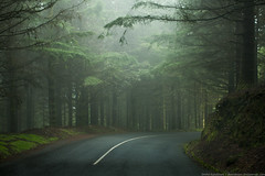 On the road (Dmitri Korobtsov) Tags: road portugal 50mm explore madeira myst canonef50mmf12lusm laurisilvaforest