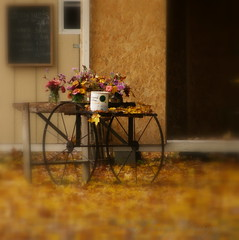 10.4.12: Bouquets (Ruff Edge Design) Tags: flowers autumn leaves maine picasa cropped straightened softfilter lightingadjusted
