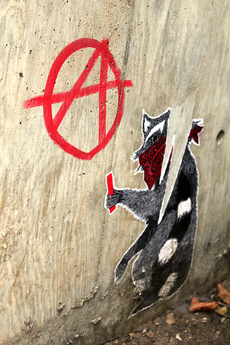 From flickr.com: Damn  vandal raccoon {MID-69883}