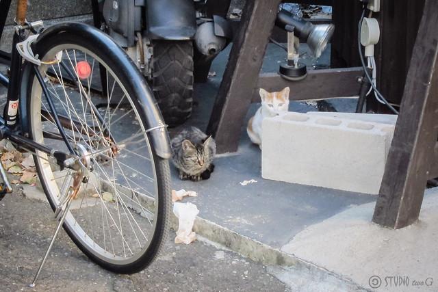 Today's Cat@2012-10-09