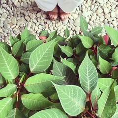 Happy Friday {Explore} (Graella) Tags: planta hojas leaves fulles verde green verd cenital pies peus feet selfie piedras pedres stone jardn jard garden iphone