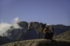 Horse Man (narenrit) Tags: horse man duo mount money contractors wait sky cloud day fog mist mountains