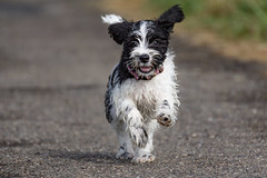 EINSCHULUNG UND ENERGIE ABBAU (rentmam1) Tags: dog hund lenny zwergschnauzer