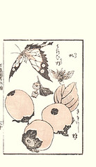 Japanese persimmon (Japanese Flower and Bird Art) Tags: flower persimmon diospyros kaki ebenaceae katsushika ukiyo woodblock picture book japan japanese art readercollection taito