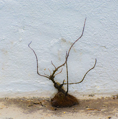 Smaller the Small. (Omygodtom) Tags: abstract art weired odd strange weed white flickr nikkor urbunnature sunny wall nikon d7100 nikon70300mmvrlens scene senery