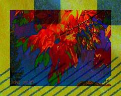 leaves (Sonja Parfitt) Tags: manipulated layered