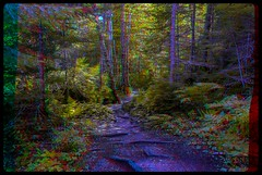 Ontario Outback 3-D / Anaglyph / Stereoscopy / HDR / Raw (Stereotron) Tags: north america canada province ontario trees forest plants quietearth anaglyph anaglyph3d redcyan redgreen optimized anaglyphic anabuilder 3d 3dphoto 3dstereo 3rddimension spatial stereo stereo3d stereophoto stereophotography stereoscopic stereoscopy stereotron threedimensional stereoview stereophotomaker stereophotograph 3dpicture 3dglasses 3dimage twin canon eos 550d yongnuo radio transmitter remote control synchron in synch kitlens 1855mm tonemapping hdr hdri raw